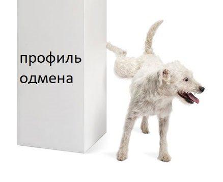 dog-tags-angle.jpg
