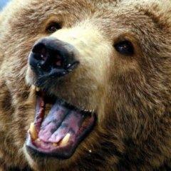 Medvedina